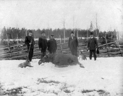 Älg jakt i Stockfors 1899